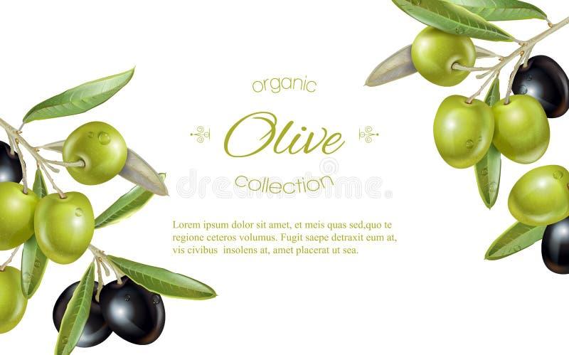 Olive horizontal banner royalty free illustration