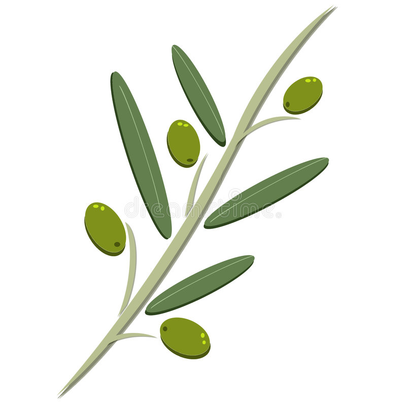 Olive illustration stock images