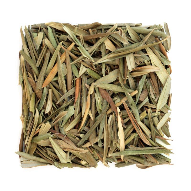 Olive Leaf Herb stock fotografie
