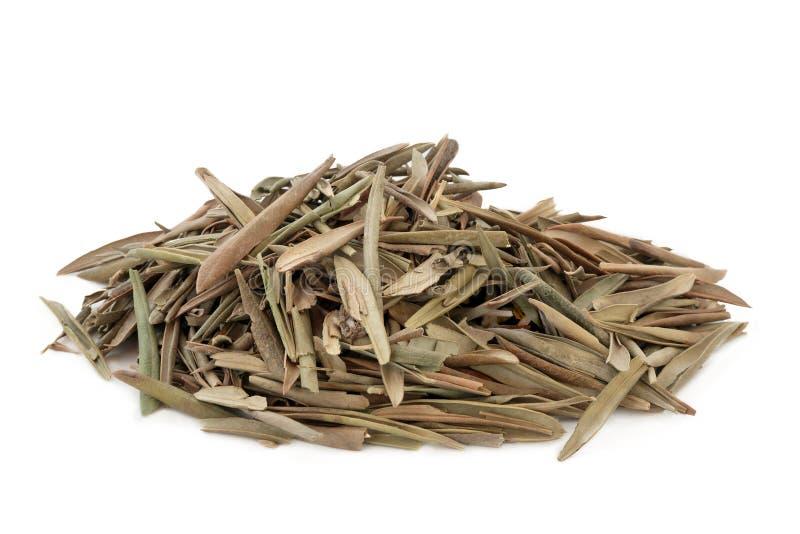 Olive Leaf Herb stock afbeelding
