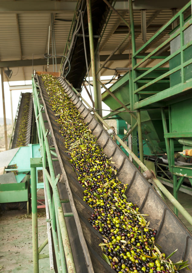 Olive mill conveyor belts royalty free stock images