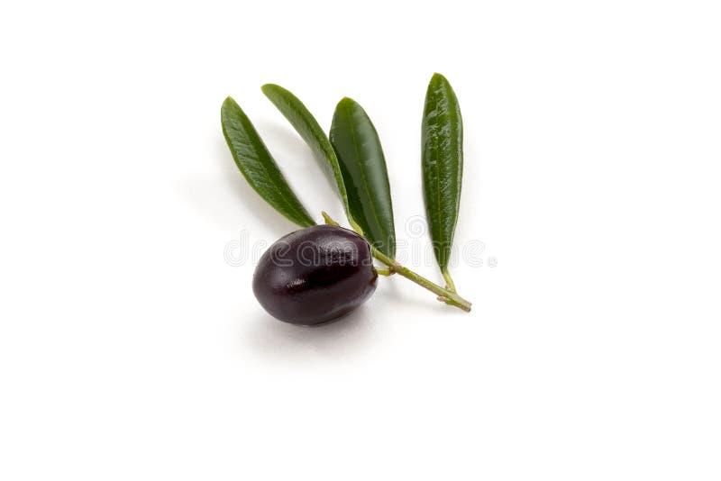 Olive mit Blatt lizenzfreies stockbild