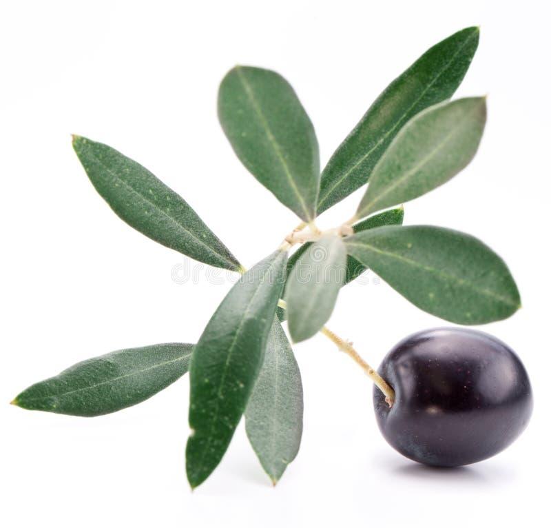 Olive noire mûre avec des lames. photographie stock