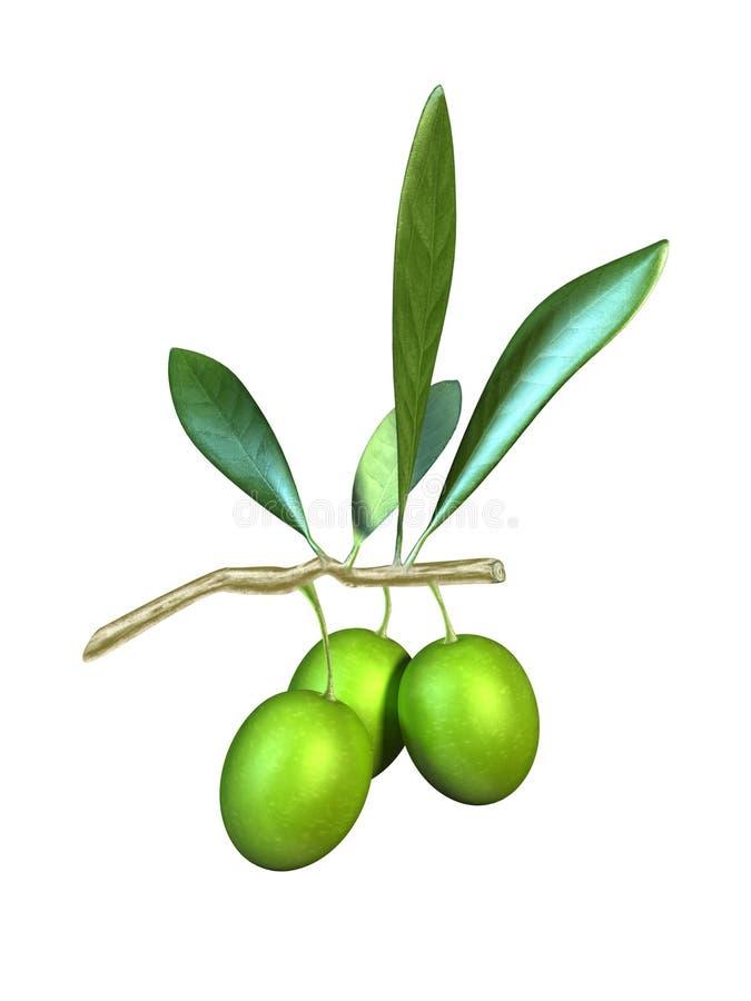Olive oil royalty free illustration