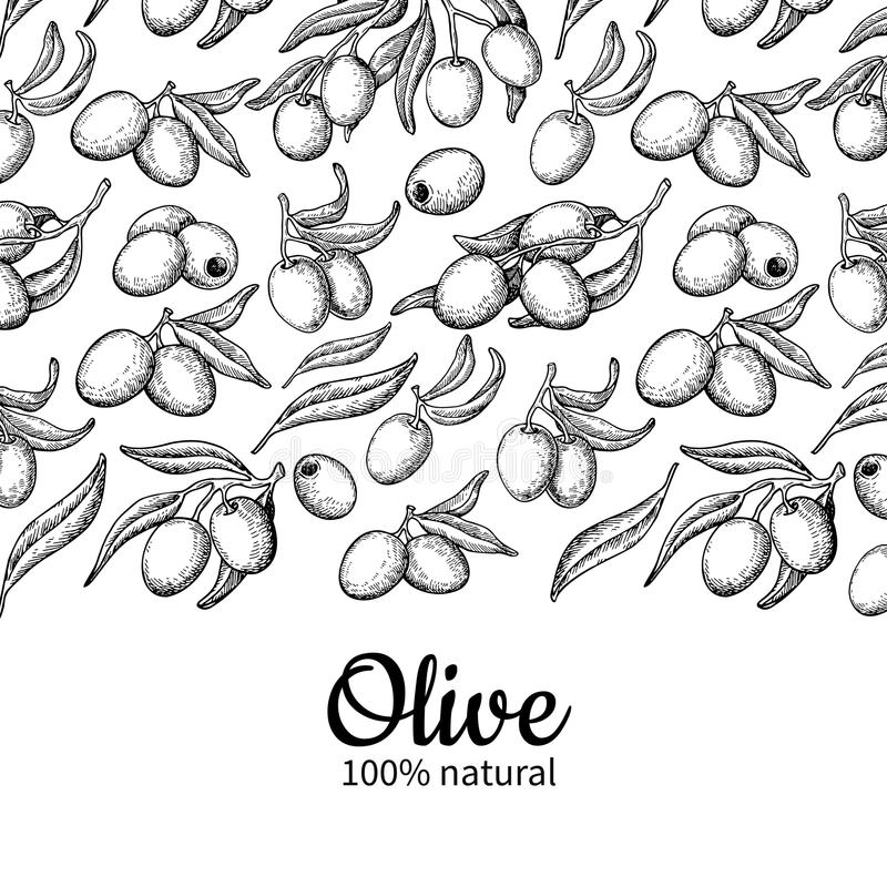 Olive oil label. Hand drawn vector illustration of branch with b royalty free illustration