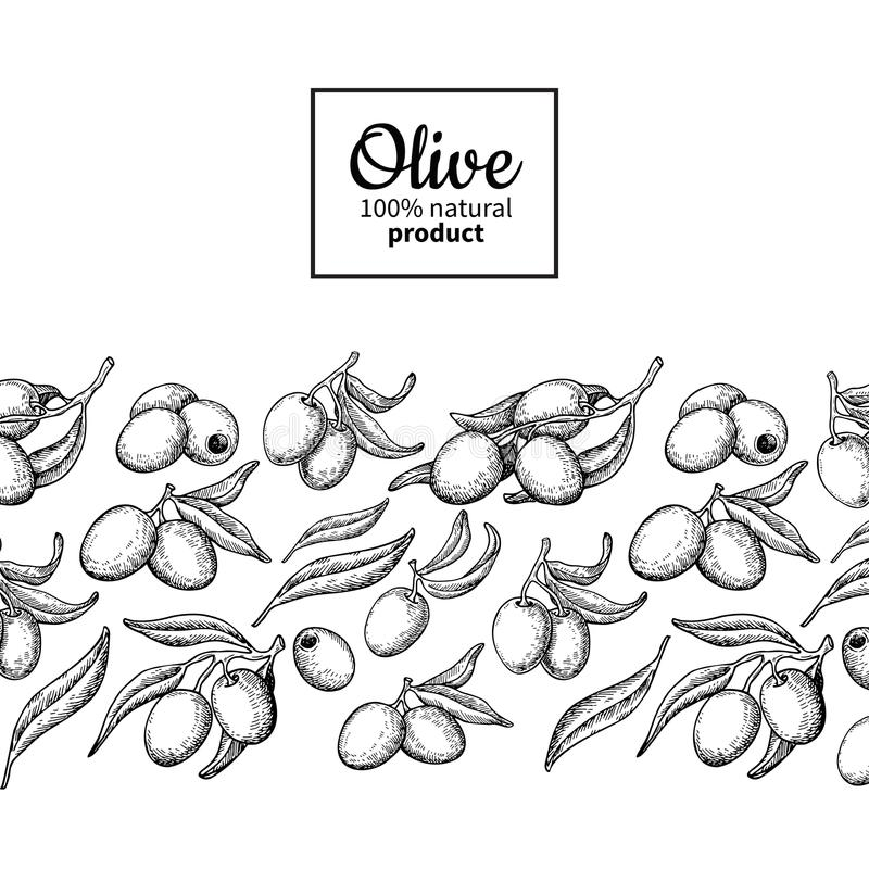 Olive oil label. Hand drawn vector illustration of branch with b vector illustration