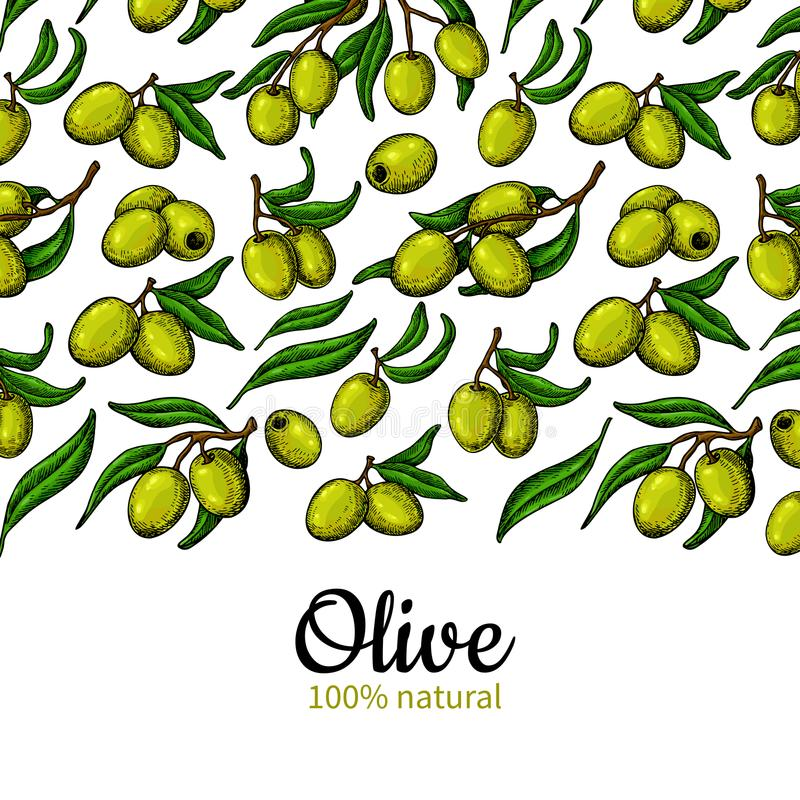 Olive oil label. Hand drawn vector illustration of branch with b stock illustration