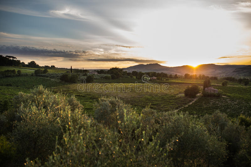 Download Olive orchard in sunset stock photo. Image of green, farm - 44776030