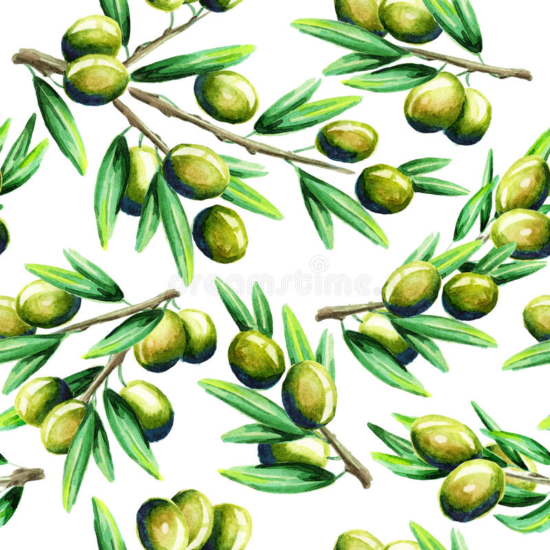 Olive pattern, watercolor royalty free illustration