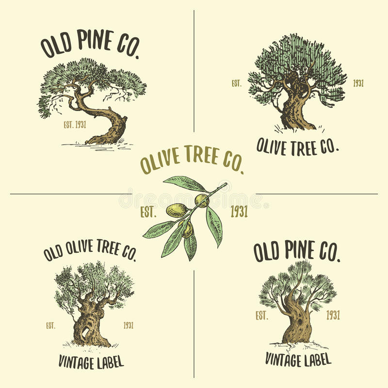 Olive and pine tree logos engraved or hand drawn, old looking emblem for ecology, camping or food branding vector illustration