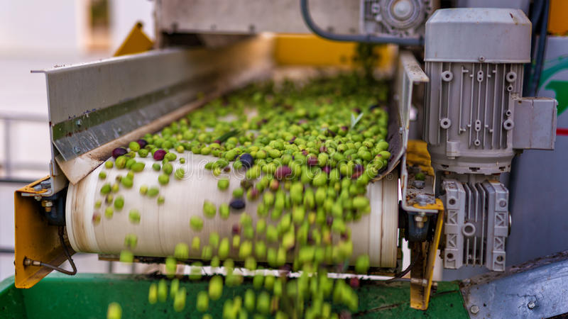 Olive processing stock images