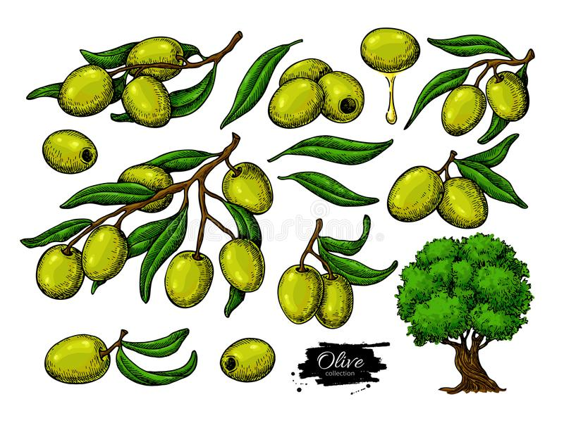 Olive set. Hand drawn vector illustration of branch with green food, tree, oil drop. royalty free illustration