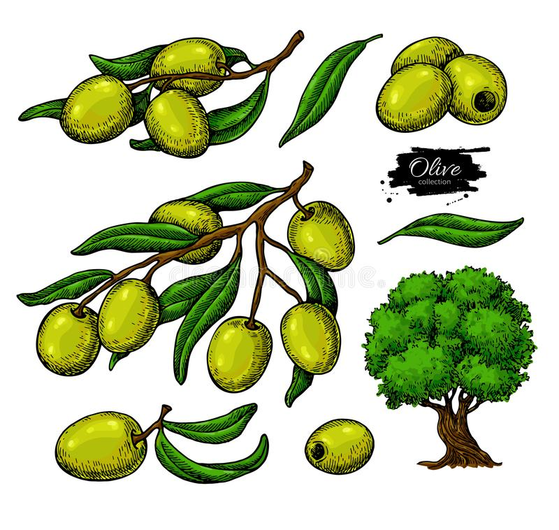 Olive set. Hand drawn vector illustration of branch with green food, tree, oil drop. Isolated drawing on white royalty free illustration