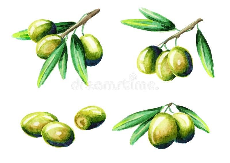 Olive set. Watercolor royalty free illustration
