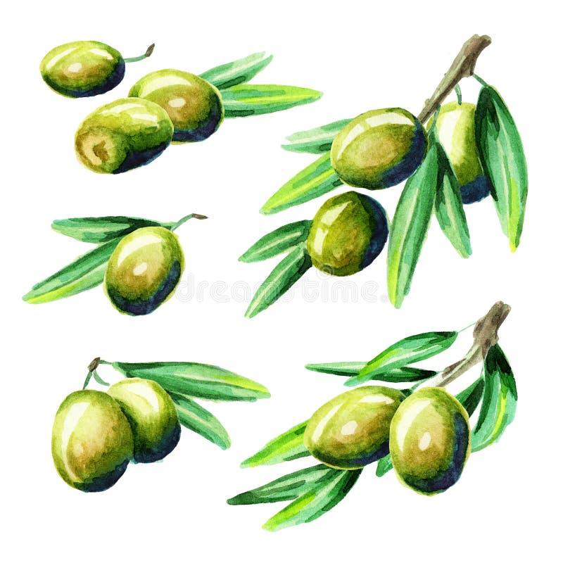 Olive set. Watercolor vector illustration