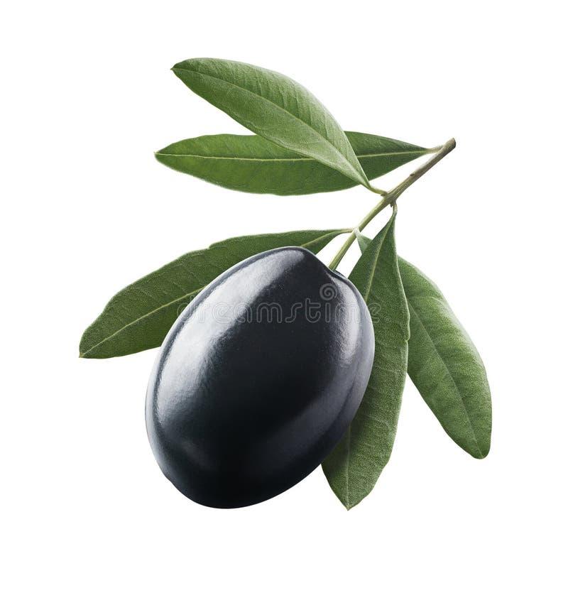 Olive simple noire 1 avec des feuilles d'isolement sur le fond blanc image libre de droits