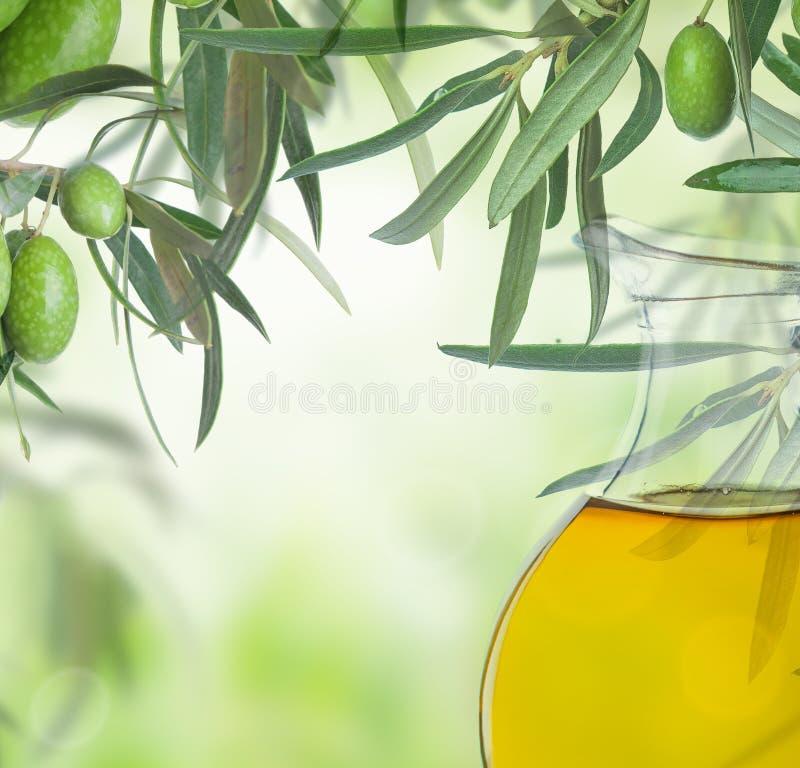 Olive su di olivo Immagine della natura di stagione Bello fondo di Sunny Harvest fotografia stock