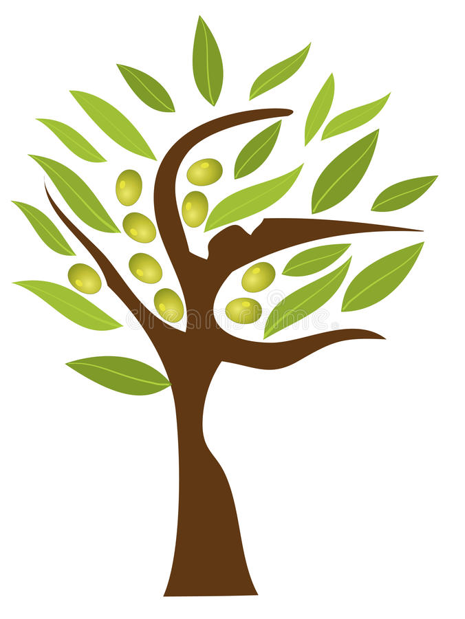 Download Olive tree stock vector. Image of beauty, high, wooden - 20806176