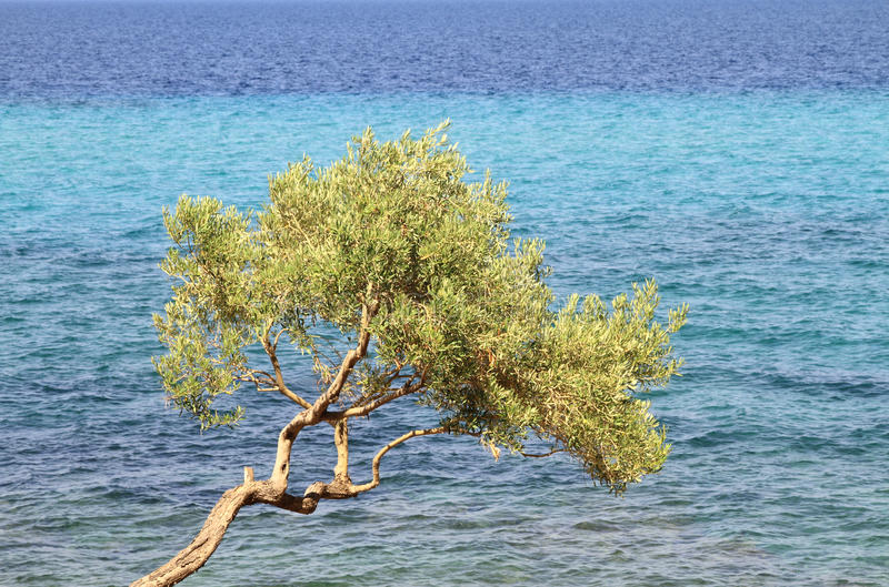Download Olive tree stock image. Image of tree, island, nature - 21091151