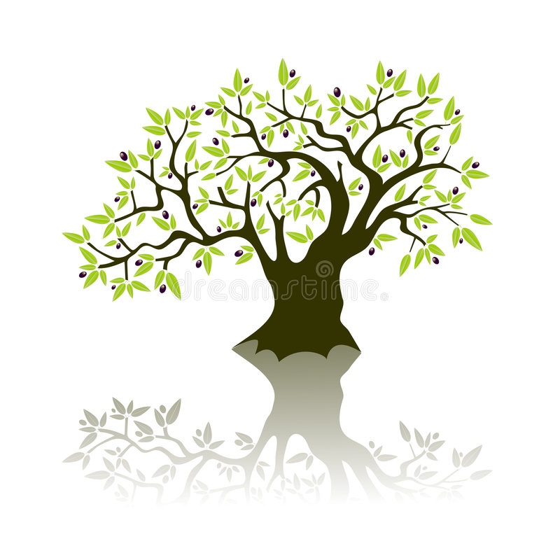 Olive tree. Green stylised Olive tree Vector illustration, with olives and leaves