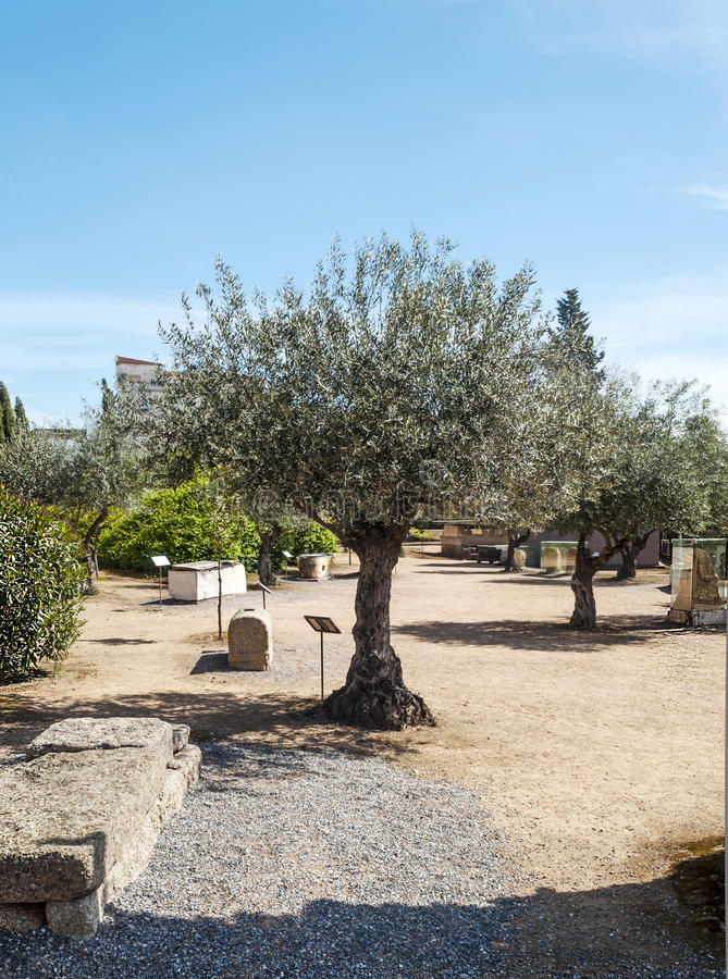Download Olive Tree With Ancient Stones Royalty Free Stock Photo - Image: 30455235