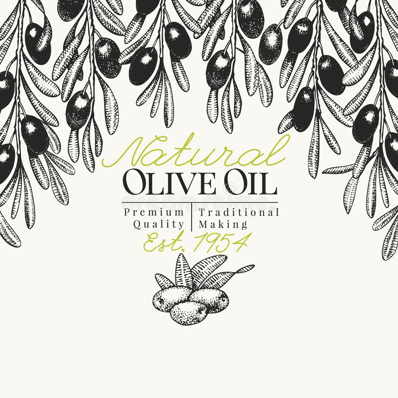 Olive tree banner template. Vector vintage illustration. Hand drawn engraved style background. Design for olive oil. Olive tree banner template. Vector retro vector illustration