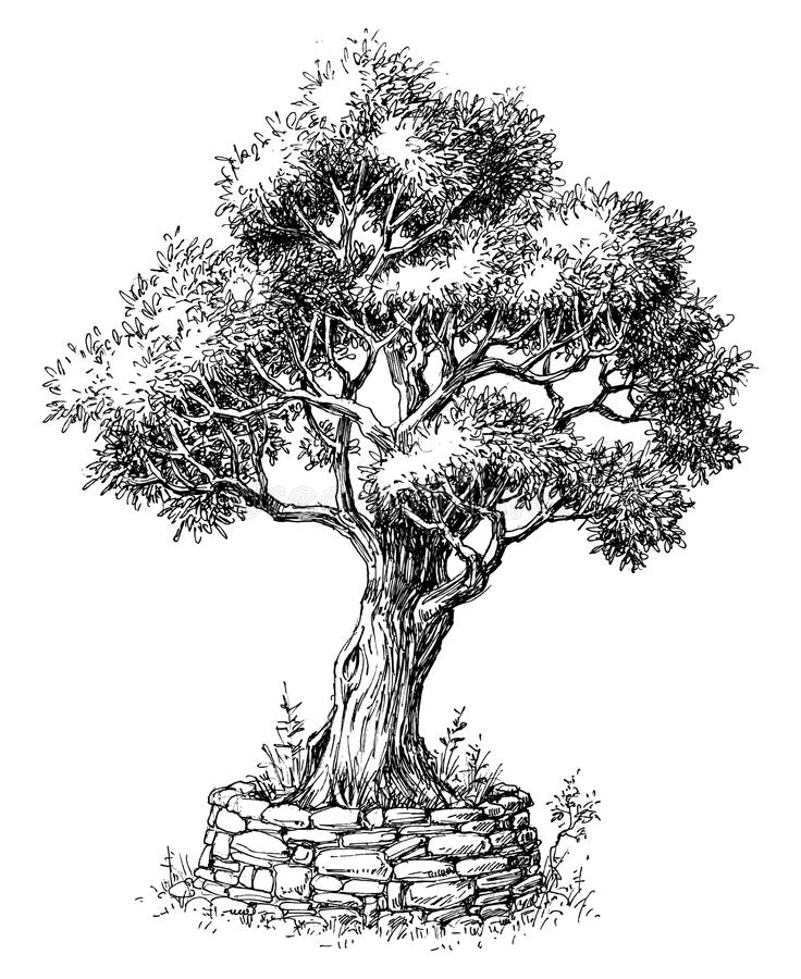 Olive tree drawing royalty free illustration