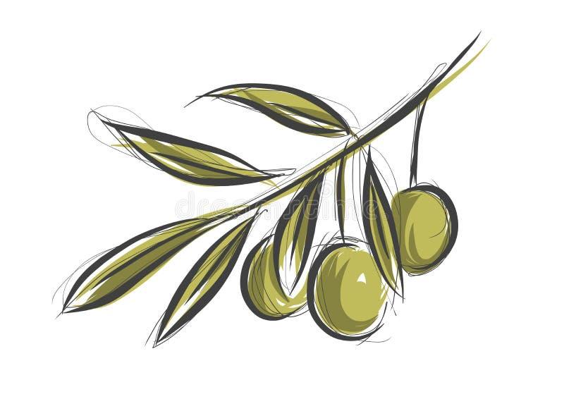 Olive tree branch stock illustration