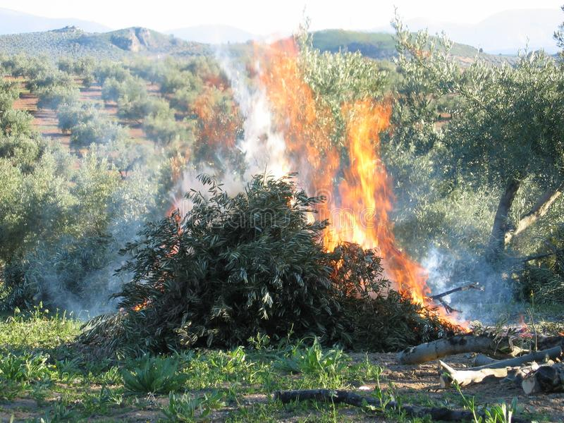 Olive tree branches burning in Jaen. Andalusia stock photos