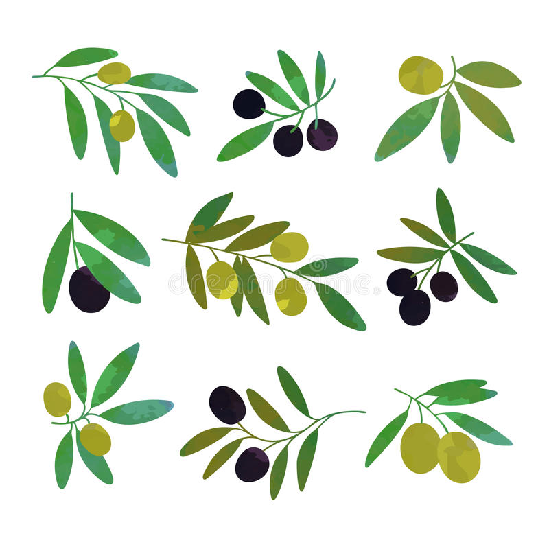 Olive tree branches set of colorful vector Illustrations royalty free illustration