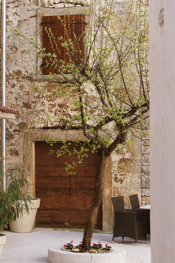 Olive tree in a croatian courtyard royalty free stock photos