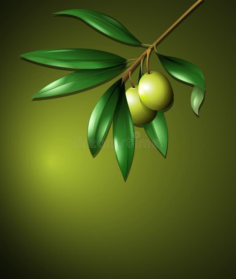 Olive and Tree on Green Background. Illustration royalty free illustration