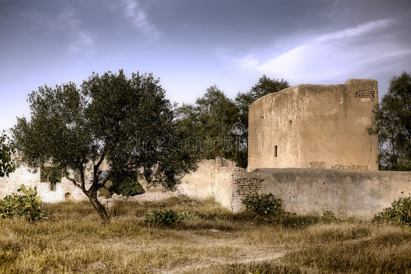Download Olive tree HDR stock photo. Image of fortified, harassment - 6327884