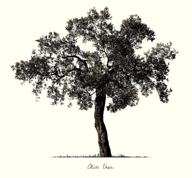 Olive Tree kontur royaltyfri illustrationer