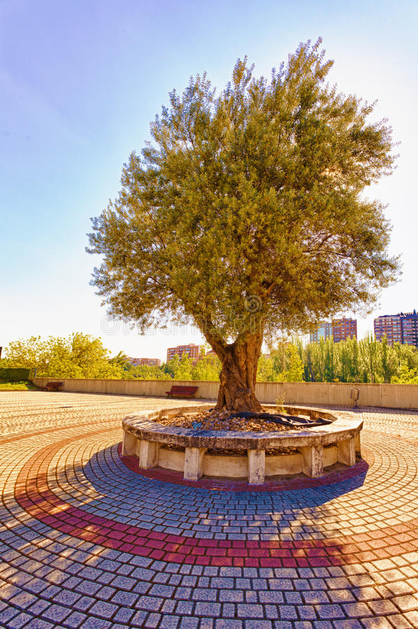 Olive Tree Monument Stock Photo