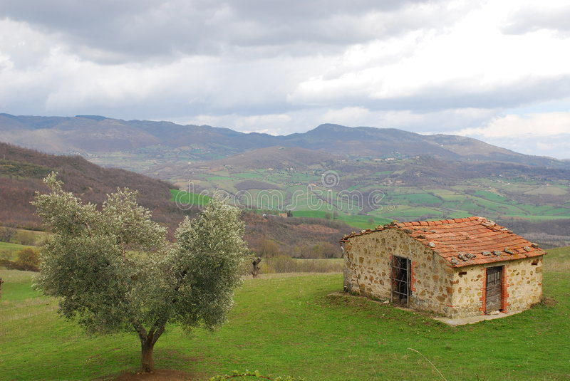 Olive Tree and Old Hut in Tuscany