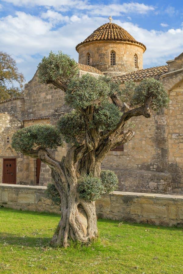 Free Olive Tree On Panagia Angeloktisti Church Background Kiti Larnaca Cyprus Royalty Free Stock Photo - 69078345