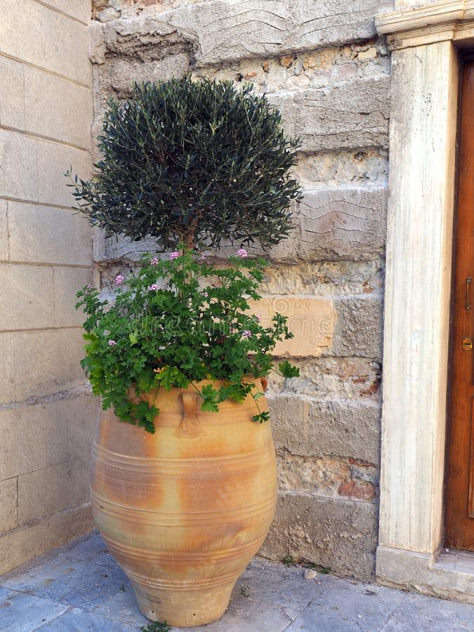 Olive Tree pequena no potenciômetro da terracota imagens de stock royalty free