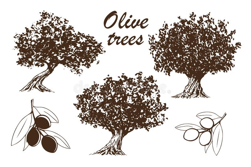 Olive tree - set of hand drawn illustrations of trees and branches with olives. Black and white drawing on white background vector stock illustration