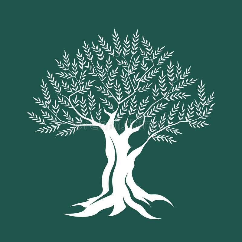 Olive tree silhouette icon isolated on green background. vector illustration