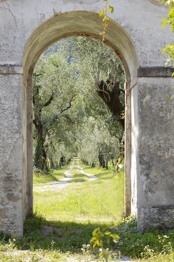 Olive Trees Through The Archway. A view of an olive grove through an archway into a walled garden stock photo