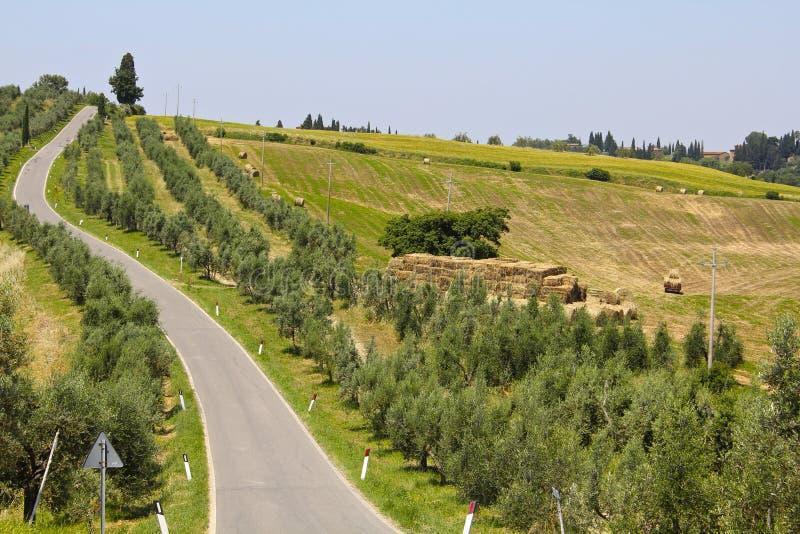 Olive Trees en Toscane, Italie photos stock