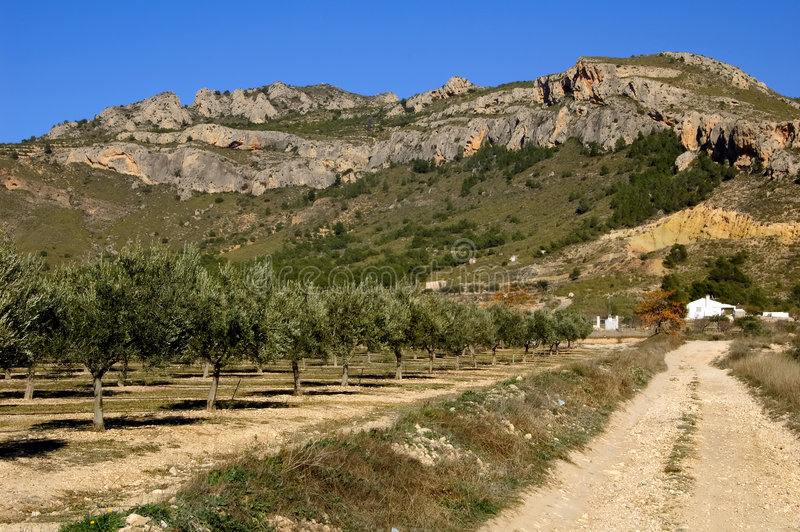 Olive trees plantation in Spain stock photography