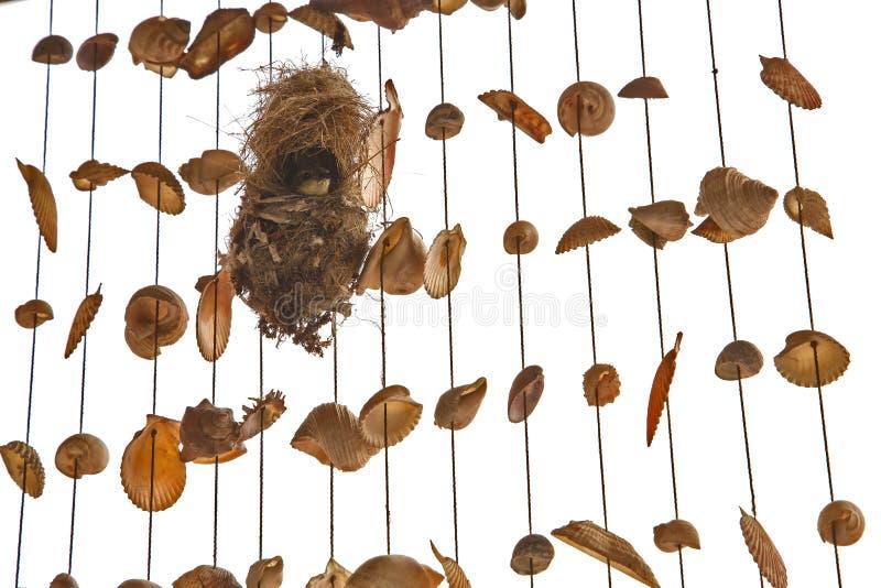 Olive-unterstütztes sunbird brüten im Nest aus lizenzfreie stockfotos