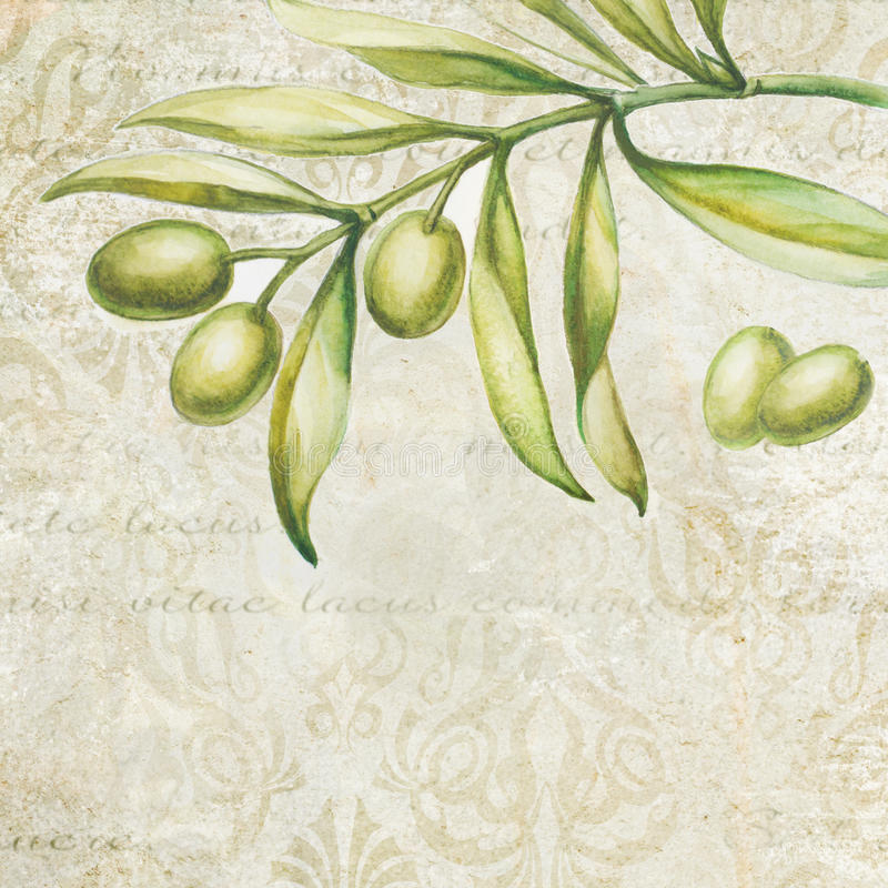 Olive verdi illustrazione di stock