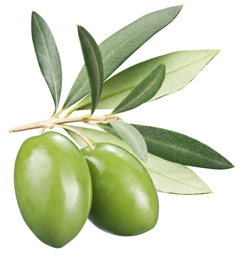 Download Olive Verdi Con Le Foglie Su Un Fondo Bianco Fotografia Stock - Immagine di ramoscelli, tabella: 56893330