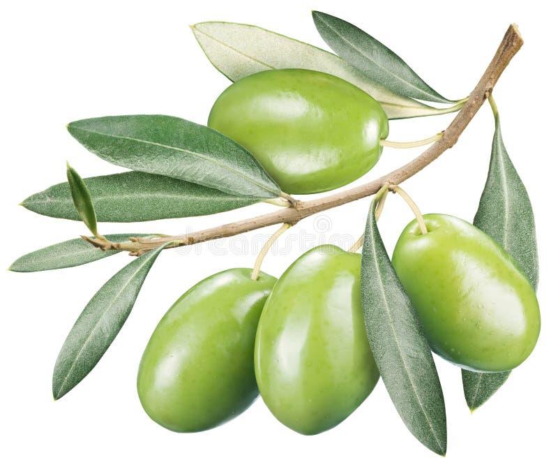 Download Olive Verdi Con Le Foglie Su Un Fondo Bianco Fotografia Stock - Immagine di olive, bianco: 56893458