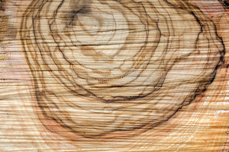 Olive wood royalty free stock images