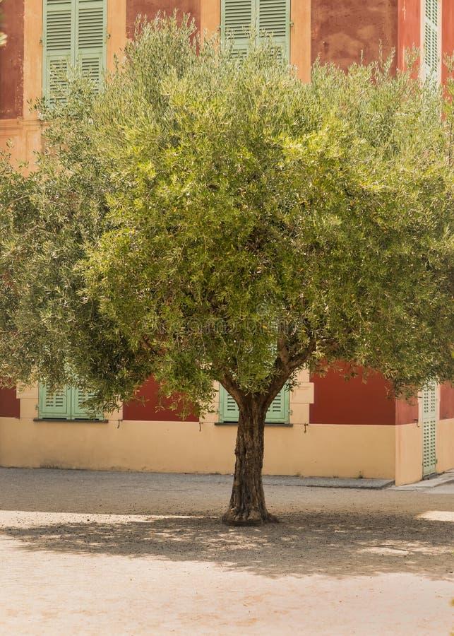 Oliveira na frente do museu de Matisse imagem de stock