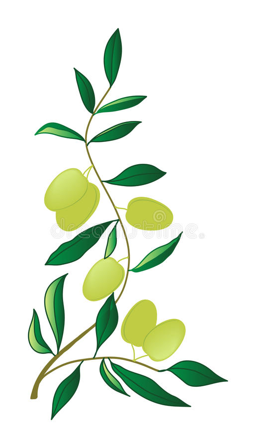 Oliven stock abbildung